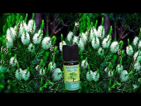 Эфирное масло чайного дерева: польза, лечебные свойства