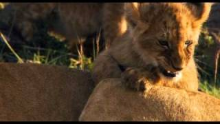 African Cats: Field Guide 2
