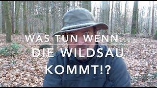 """""""Gefahr"""" durch Wildschweine? (Ergänzte 2018er Fassung)"""