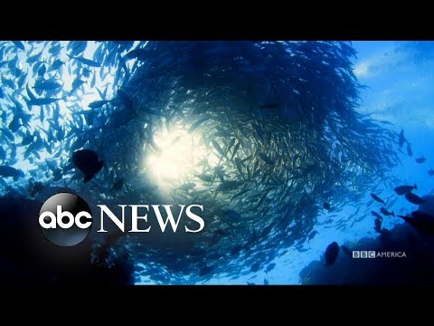 Show explores the world beneath the ocean's surface