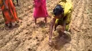 Lemon grass Cultivation training