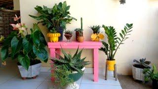 10 Plantas Charmosas Que São Muito Fáceis De Cultivar