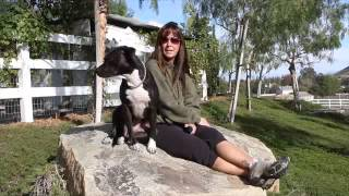 Stop Aggressive Dog Behavior-pit Bull. Success Story-doggie Boot Camp