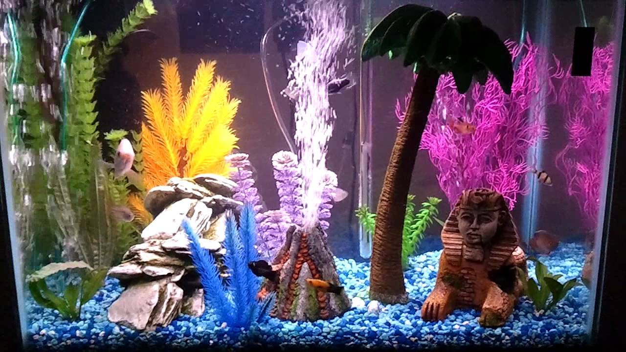 Fish tank volcano - Update On My 20 Gallon Tropical Aquarium