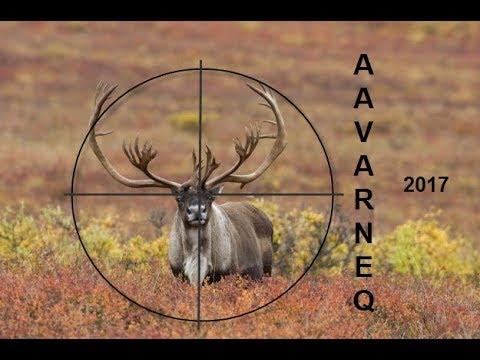 Aavarneq 2017 - Rensdyrjagt 2017 - Reindeerhunting 2017