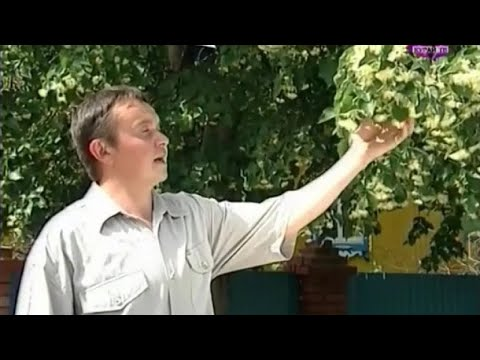 Илшат Сибәғәтуллин - Атайым йүкәләре