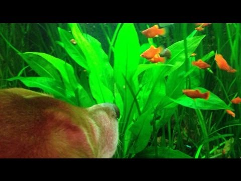 ANIMALISCH Nr 15 @ World Ocean Day im Zoo Basel