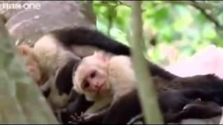 the best funny talking animals compilation video steve steve alan alan