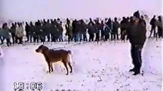 Легендарный Кайтмаз(Кайтпас)