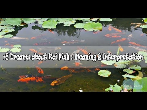 #24 Koi Fish Dream Meaning & Interpretation