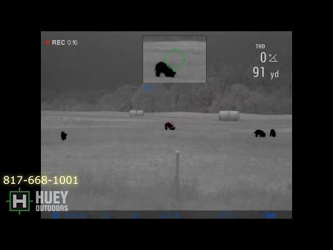 Hog Hunting with 300 Hammer Trail 2 LRF XP50