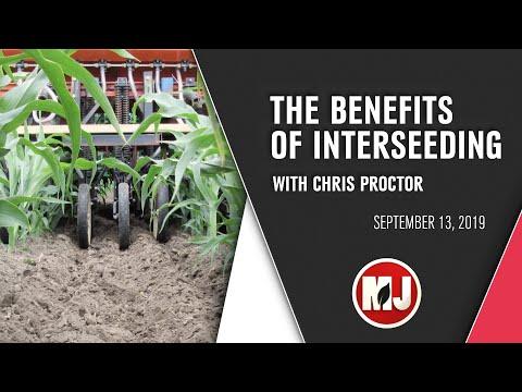 Interest in Interseeding | September 13th, 2019