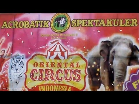Sirkus Taman Safari ( Oriental Circus ) Indonesia [ Full Time HD ]