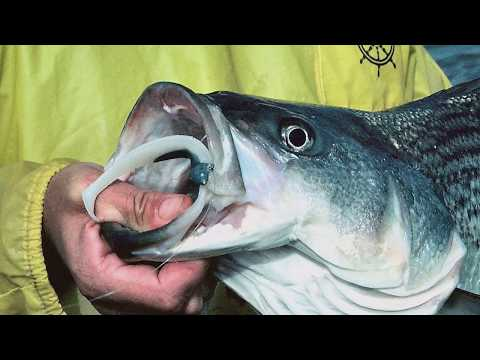 Hot Bites Fishing Report Nov. 21   Visit Jacksonville