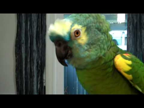 Parrot talks and gets sassy with grandma