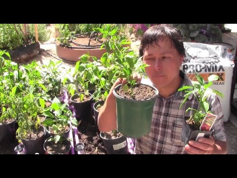 How to Prevent Transplant Shock So You Don't Lose Your Plants like Mike