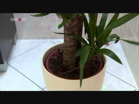 Der gr ne tipp zimmerpflanzen pflege im winter doovi - Bambus zimmerpflanze pflege ...
