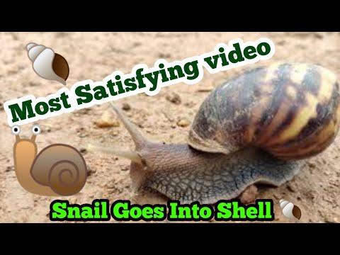 #snail #shell #snailshell Snail Goes In Shell