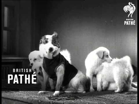 Russian Space Dogs Strelka And Belka (1961)