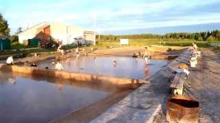 Тобольск - Винокурова. Термальный источник.(, 2011-07-23T14:32:04.000Z)