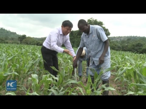 First Chinese-sponsored agriculture training held in Nigeria