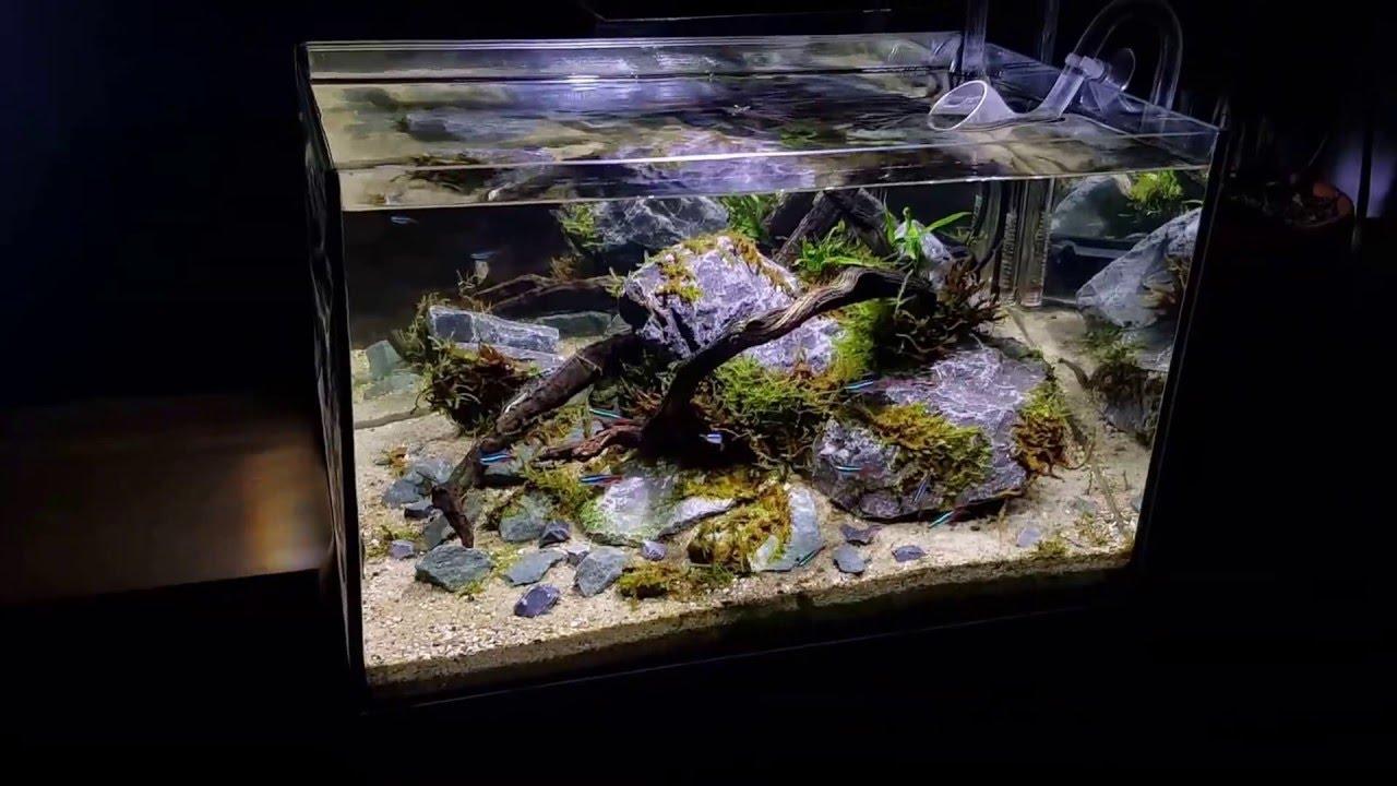 aquarium 45x30x30 with mirror background