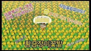 금장미를 꽃피워보자!!!