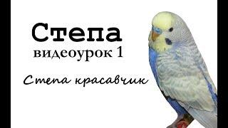 "Учим попугая по имени Cтепа говорить. Видеоурок 1:""Степа красавчик!"""