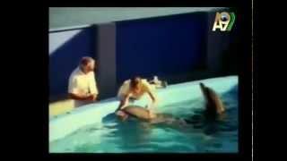 Кожа дельфина