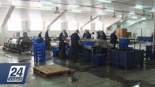 Продукция Жамбылского рыбоперерабатывающего завода завоевала рынок Европы