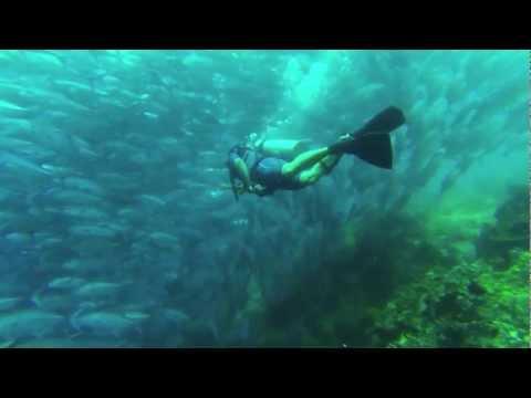 Black Forest Dive - Balicasag Island, Panglao Bohol Philippines