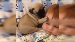 Funny animals with Baby