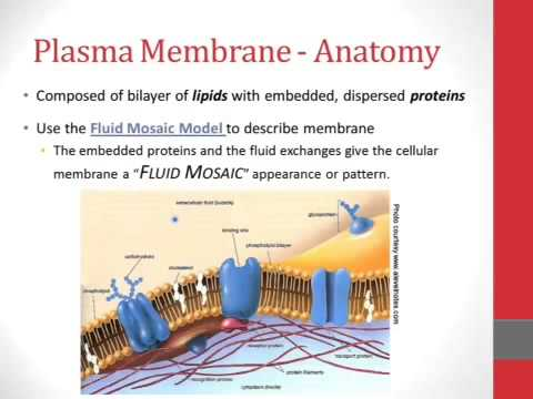 LECTURE: Introduction to the Cell Membrane Structure - YouTube