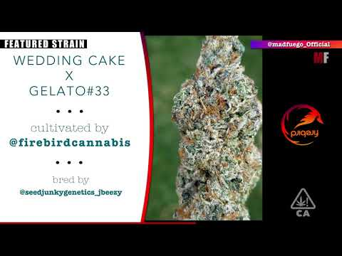 Featured Strain - Firebird - Wedding Cake x Gelato 33 - APOP