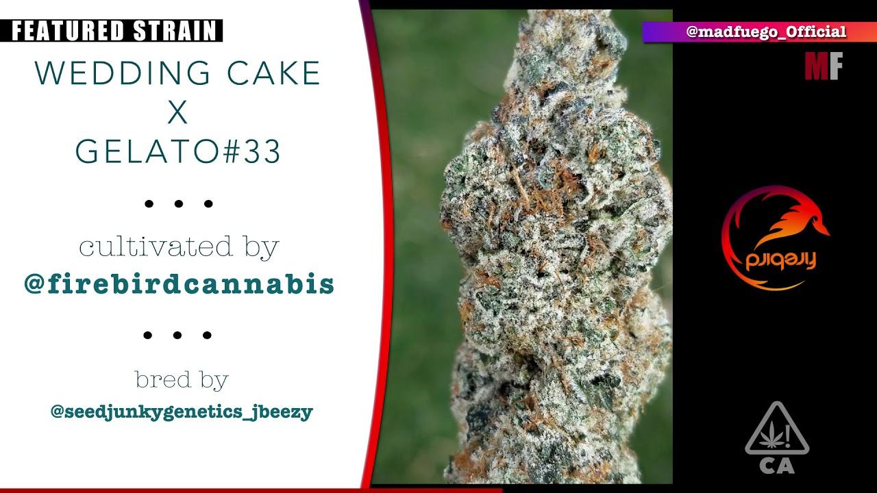 Featured Strain Firebird Wedding Cake X Gelato 33 Apop Media