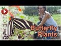 Building A Butterfly Garden - Planting the Native Butterfly Plants - Part 2