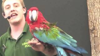 Macaw Parrots (Very Funny) - ZSL London Zoo - Animals in Action
