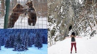 Vlog de calatorie: Sanctuarul ursilor, Prapastiile Zarnestilor & Parcul National Piatra Craiului