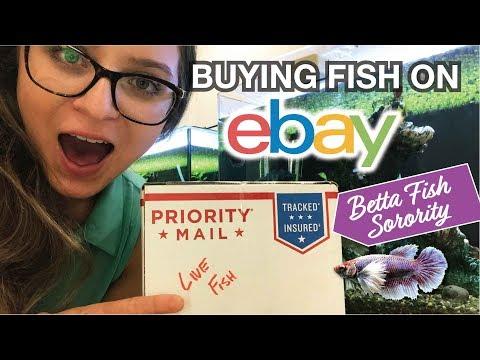 BUYING FISH ON EBAY! Female Betta Sorority Fish