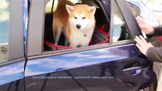 Автогамак для собак Тренд Доггин Дабл – лучшее решение для питомца и салона автомобиля