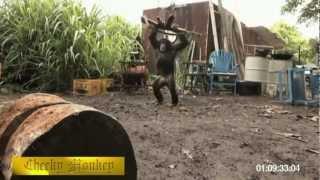 when animals attack part 3 compilation rampage 2013