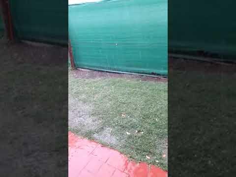 Una fuerte granizada con lluvia azotó a Mendoza