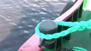 видео Веревка капроновая плетеная, фал