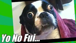 Videos De Risa De Gatos Y Perros Dañando Cosas Y Haciendo Desastres thumbnail