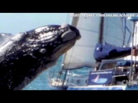 Wie groß ist ein Wale Penis www pics pussy com