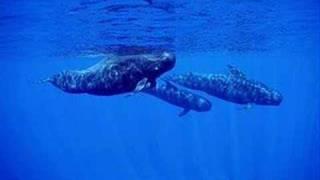 Popular Videos - Whale vocalization