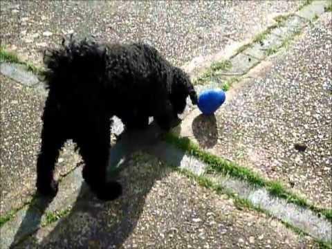 Dog Toy Fun - Nina Ottosson Dog Pyramid