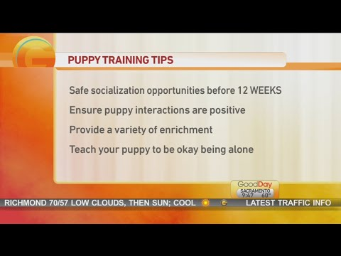 Good Day Sac - Puppy training!