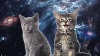 Космические коты