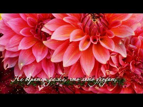Цветы августа для Вас, друзья!